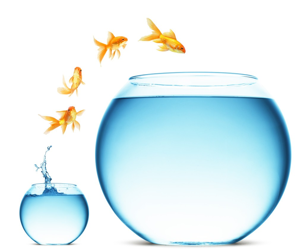 Fish-Out-of-Fish-bowl-1024x849